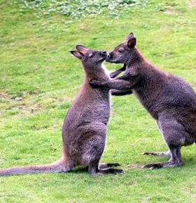Ein tierisch verliebter Valentinstag im Zoo Vivarium