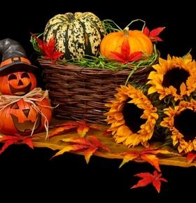 Kürbis-Basteln für Halloween im Zoo Vivarium am 26. Oktober