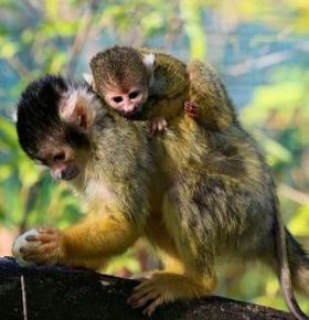 Zoo Vivarium Darmstadt: Dreifacher Nachwuchs und neue Tierart