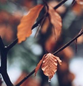 Service für Gartenbesitzer: EAD holt ab 14. Oktober Grünabfall ab