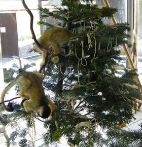 Leckerlis für Esel, Spielzeug für Affen – Vivarium nimmt am 16. Januar Bio-Weihnachtsbaumspenden an