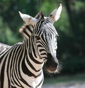 Tierpfleger-Führung im Zoo Vivarium am 11. Mai