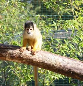 """""""Besuch bei den Affen"""" – Führung am 27. April im Zoo Vivarium"""