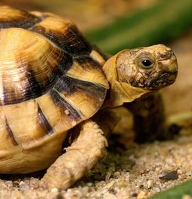 Weltartenschutztag am 3. März: Führungen im Zoo Vivarium