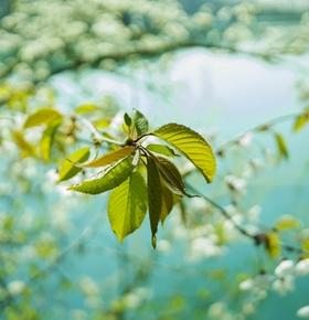 Frühjahrssammlung von Gartenabfällen: EAD bietet Termine im März und April an