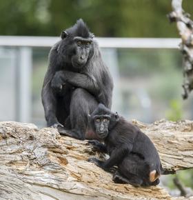 Vielfältiges Sommerferienprogramm für Kinder und Jugendliche im Zoo Vivarium ab 21.07.