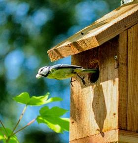 Nistkästen bauen am 31. März im Zoo Vivarium
