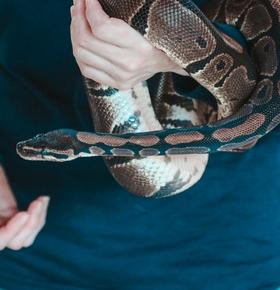 Rundgang mit hautnahem Schlangenerlebnis im Zoo Vivarium am 2. November