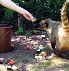 Zoo Vivarium bietet zwei beliebte Programme erneut an