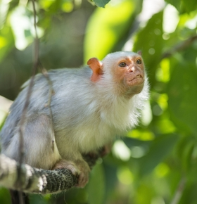 """""""Besuch bei den Affen"""": Führung am 19.10. im Zoo Vivarium"""